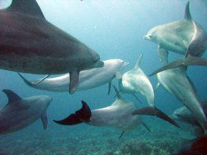 Pod of dolphins by  Serguei S. Dukachev